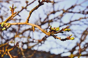 Fresh Spring Branches