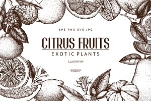 Citrus Fruits Sketch Set
