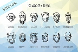 Monkey Vector Hand Drawn Portraits