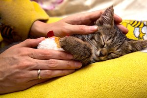 girl caresses cute sleeping kitten