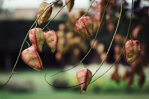 Leaves on a blurred background