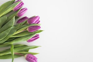 Floral Stock Image | Purple Tulips