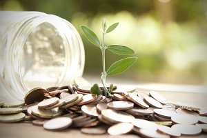 the savings pot sapling