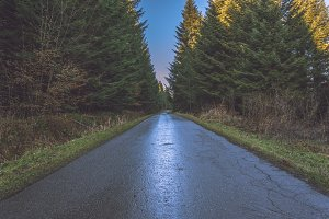 Road through the forest 1