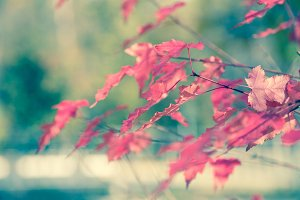 background with red leaf. t