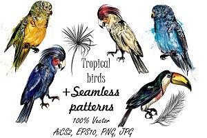 Tropical birds set + patterns