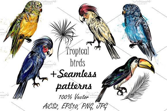 Tropical birds set + patterns in Patterns