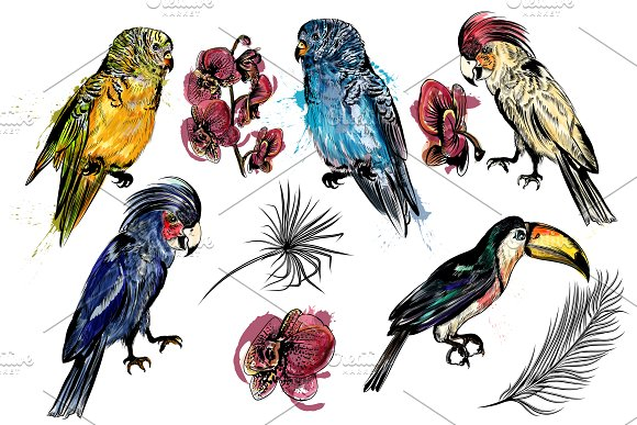 Tropical birds set + patterns in Patterns - product preview 1