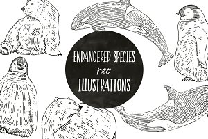 Endangered Species Illustrations