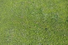 Vibrant green grass background