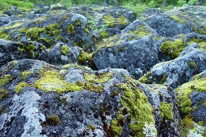 Boulders covered with moss