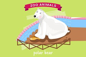 Zoo Animal, Polar Bear