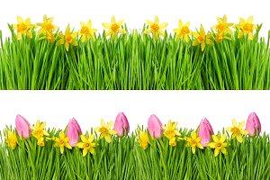Spring narcissus tulip flowers