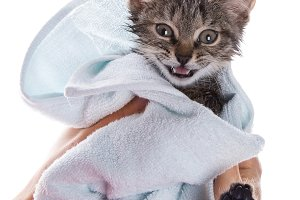 little kitten after a shower