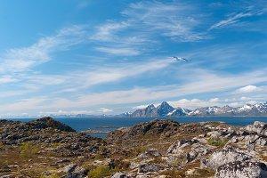 Seagull over norwegian island in sunny summer day.jpg