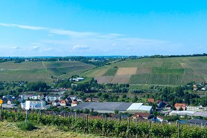 Vineyard in the German countryside.jpg