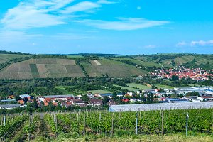 Vineyard in German countryside.jpg