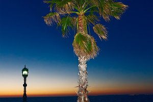 Lonely palm tree on the waterfront at sunset.jpg