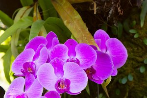 Beautiful orchid branch on a tree.jpg