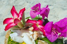 Shells and flowers on the stown in sunny day.jpg