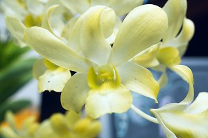 Orchid in a sunny day.jpg