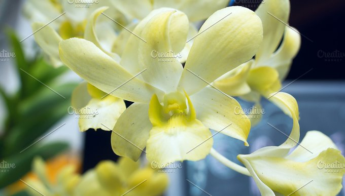 Orchid in a sunny day.jpg - Photos