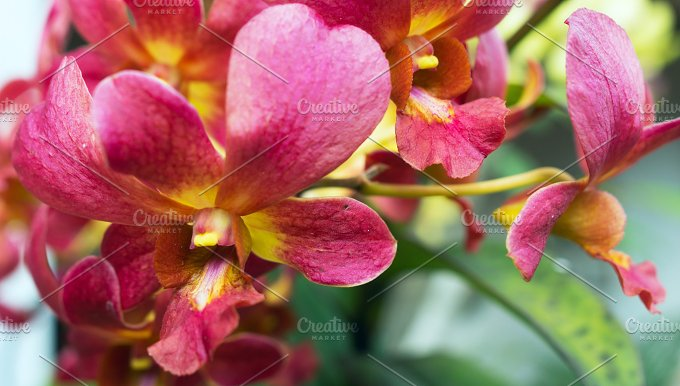 Orchid branch in a sunny day.jpg - Photos