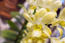Branch of orchid in a sunny day.jpg