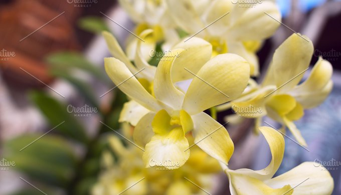 Branch of orchid in a sunny day.jpg - Photos