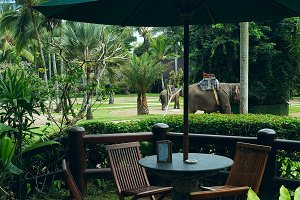 Cafe view to the park with elephants.jpg