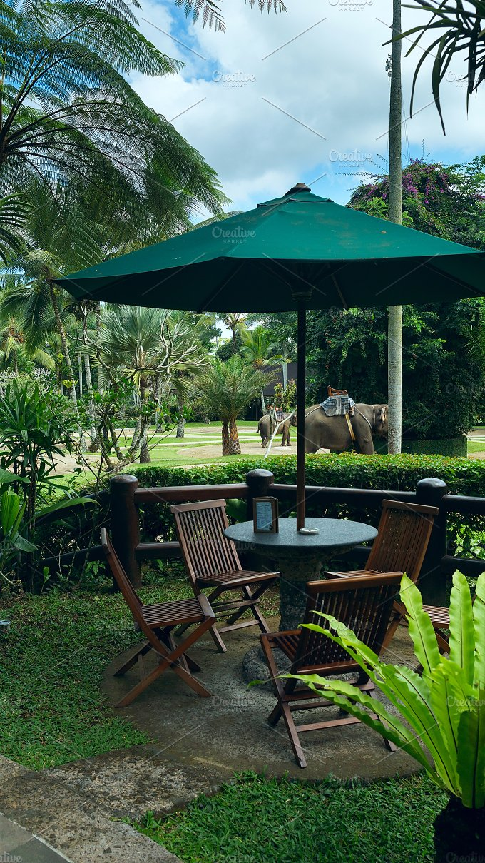 Cafe view to the park with elephants.jpg - Photos