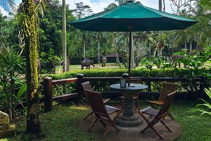 Cafe view to the green elephants park.jpg