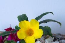 Frangipani flower and yellow flower with seashells.jpg