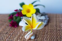 Flower frangipani on the seashell.jpg