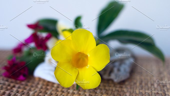 Yellow flower.jpg - Photos
