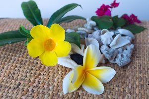 Yellow flower and frangipani white seashells.jpg