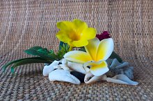 Frangipani flower with white seashells.jpg