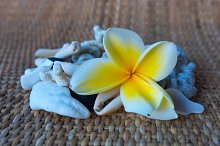 Tilt shift view to frangipani and shells.jpg