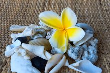 Collage by frangipani flower and white seashells.jpg