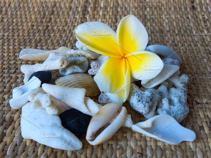 Collage by frangipani flower and white seashells.jpg - Photos