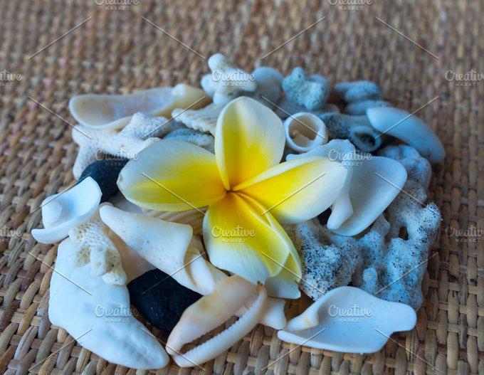 Frangipani flower and many white seashells.jpg - Photos
