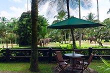 Cafe overlooking the park elephants.jpg