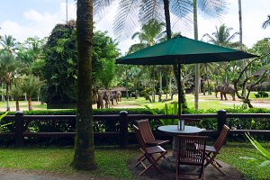 Cafe overlooking the park elephants.jpg