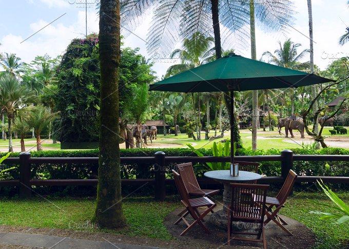 Cafe overlooking the park elephants.jpg - Photos
