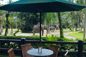 Cafe with view to the park elephants.jpg