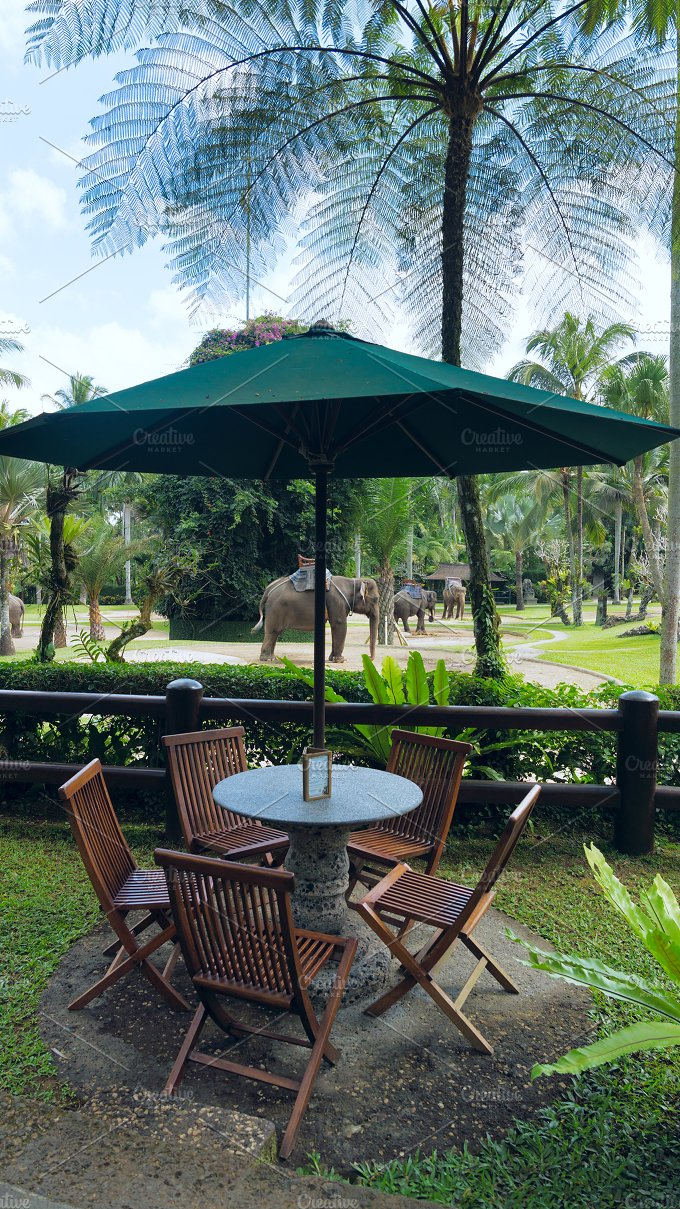 Cafe with view to the park elephants.jpg - Photos