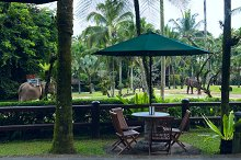 Cafe overlooking elephants.jpg