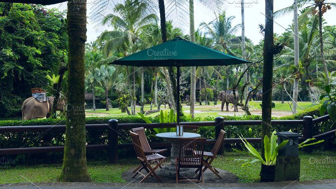 Cafe overlooking elephants.jpg - Photos