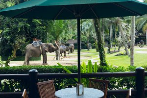 Cafe overlooking park elephants.jpg