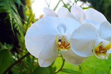 Beautiful white orchid branch.jpg